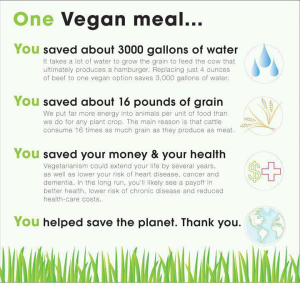 1-vegan-meal